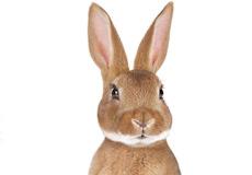 Muurstickers Dieren set hert konijn detail